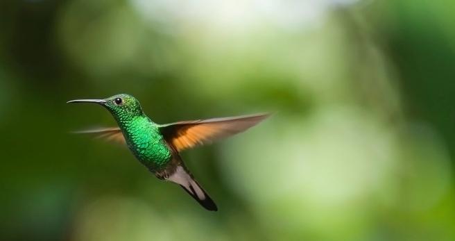 hummingbird-2139278_1920